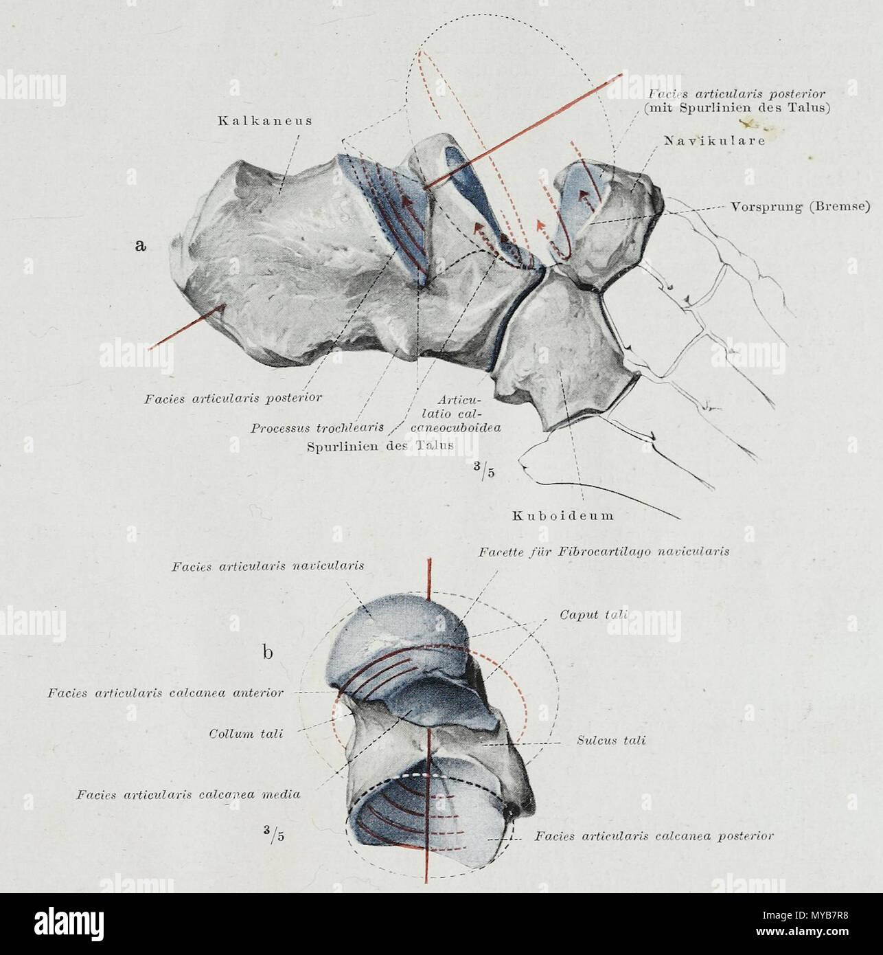 Großartig Anatomie Und Physiologie Terminologie Bilder - Anatomie ...