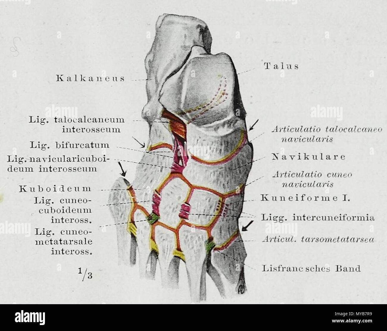 Ungewöhnlich Atem Baum Anatomie Zeitgenössisch - Anatomie Ideen ...