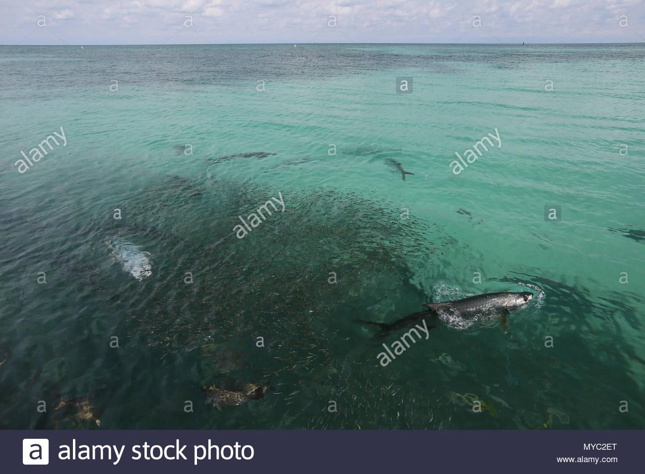 Local Atlantic Fish Stockfotos Local Atlantic Fish Bilder Alamy