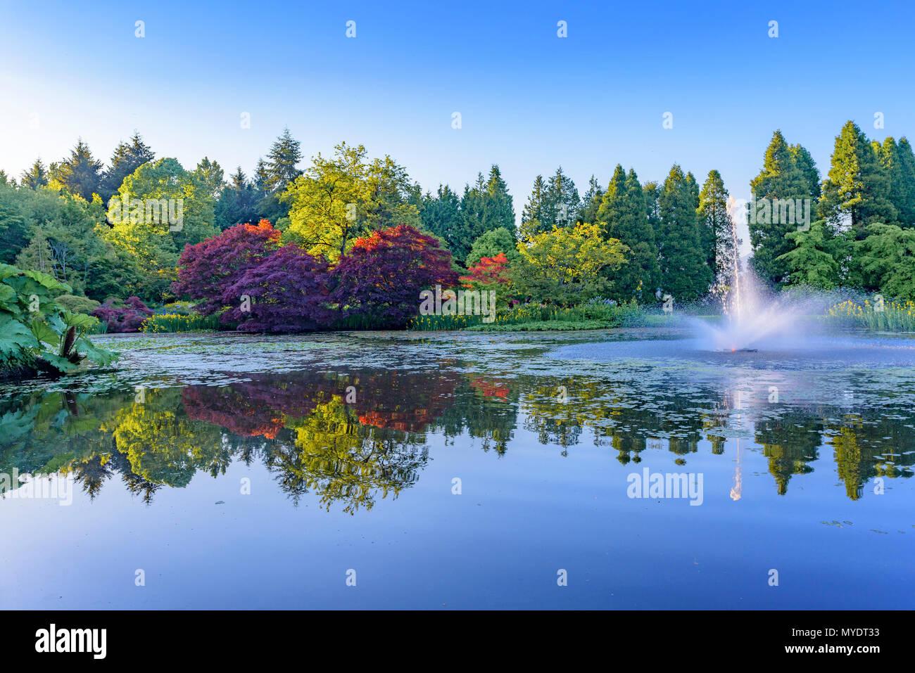 Teich mit Springbrunnen, VanDusen Botanical Garden, Vancouver, British Columbia, Kanada. Stockfoto