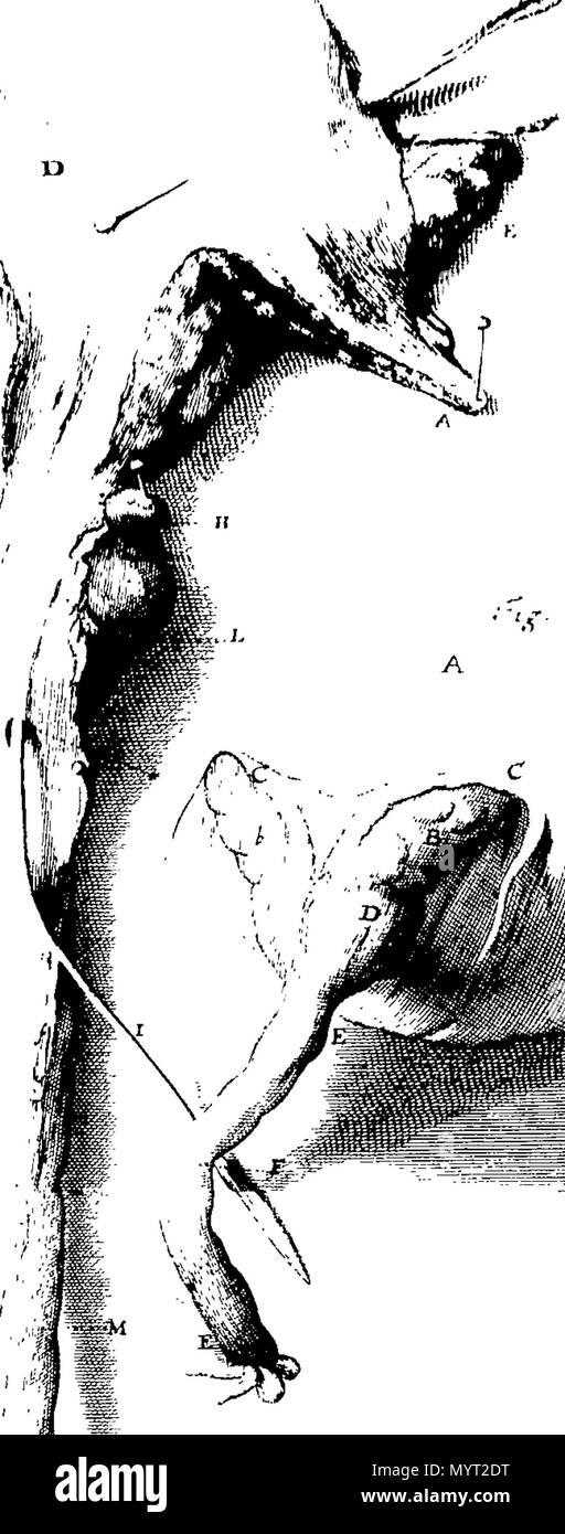 Atemberaubend Neue Anatomie Entdeckungen Bilder - Anatomie Von ...
