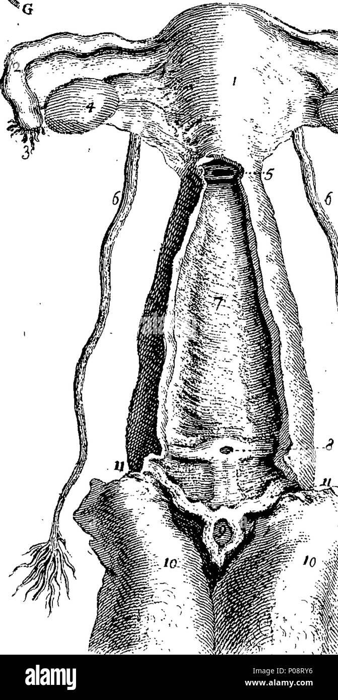 Ziemlich Anatomie Wörterbuch Online Zeitgenössisch - Anatomie Von ...