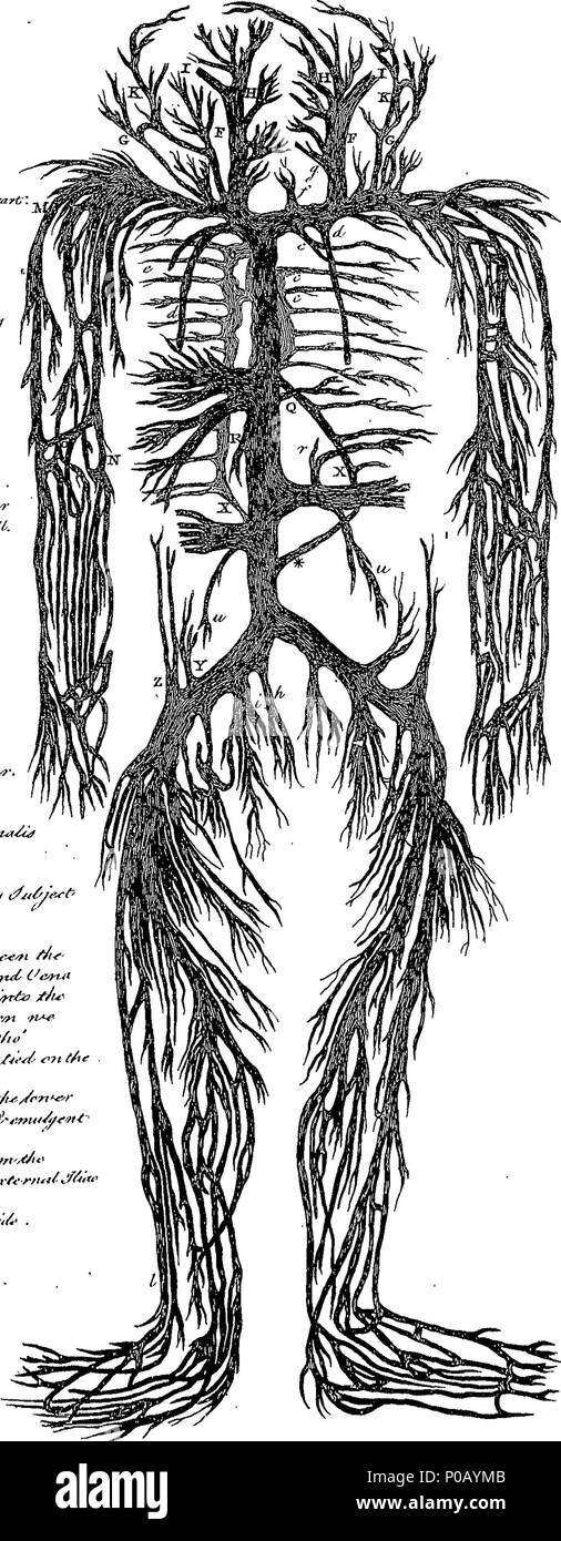 Großartig Anatomie Und Physiologie Wörterbuch Galerie - Anatomie ...