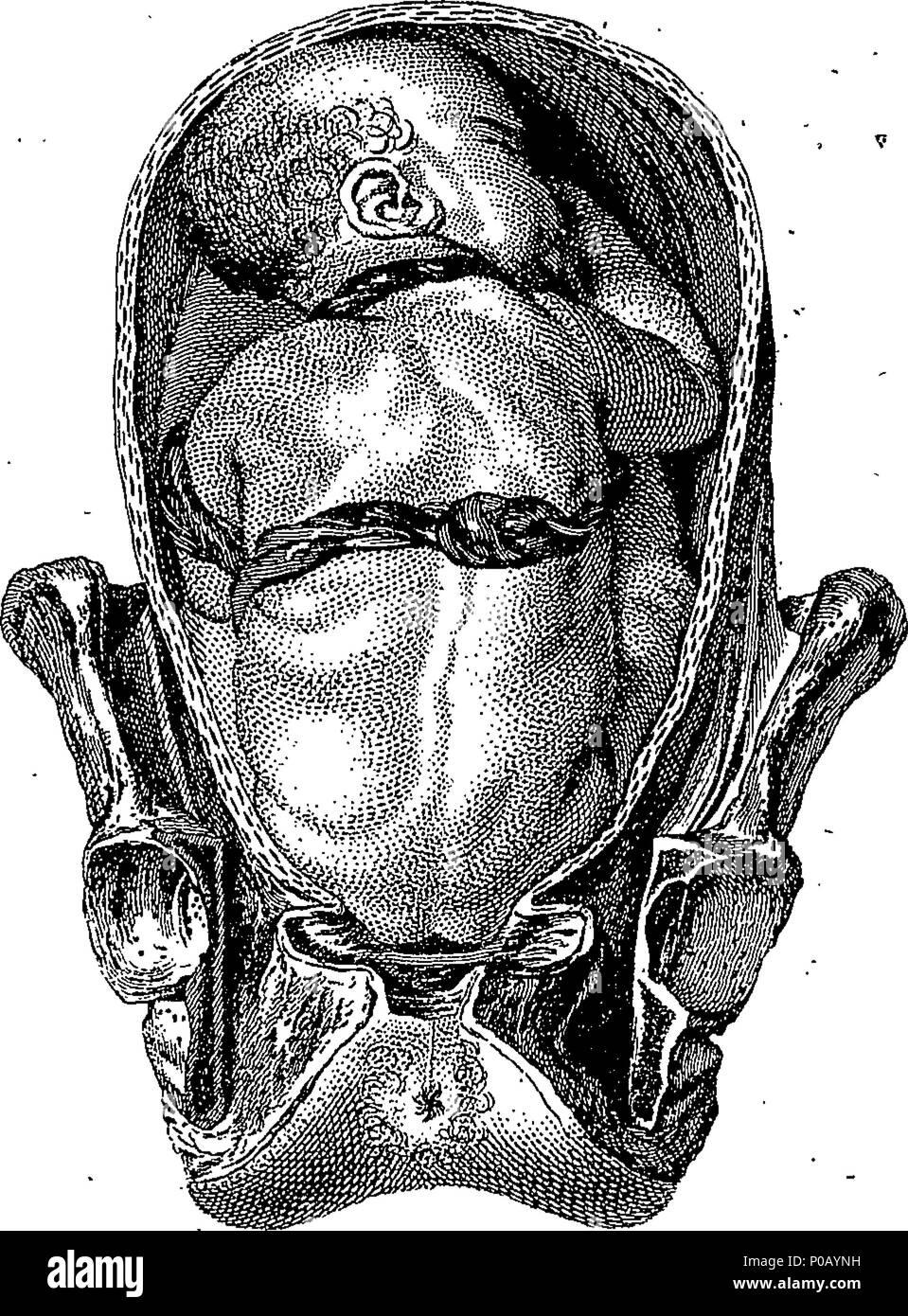 Ungewöhnlich Anatomie Und Physiologie Beschreibung Ideen ...