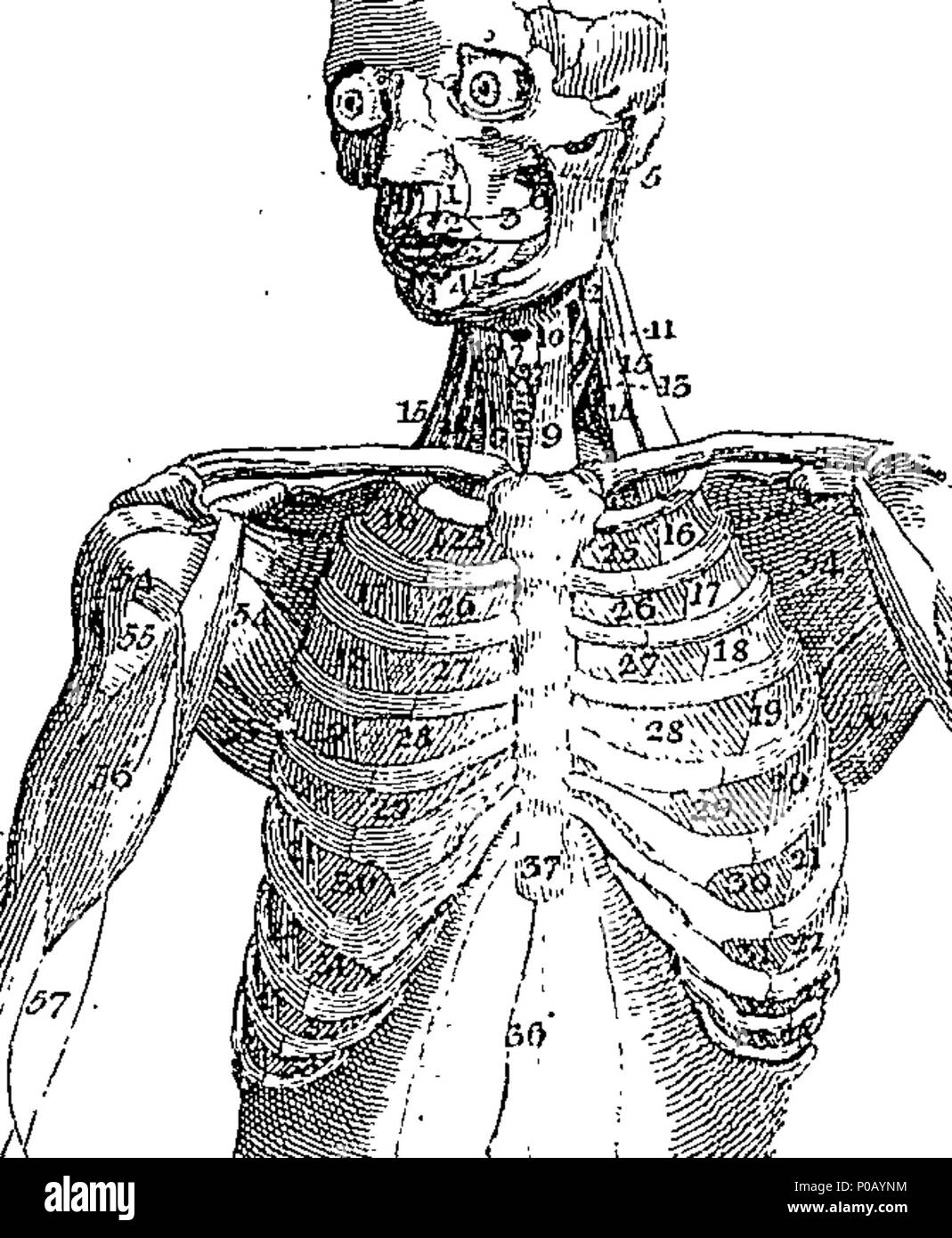 Nett Wörterbuch Der Anatomie Galerie - Anatomie Von Menschlichen ...