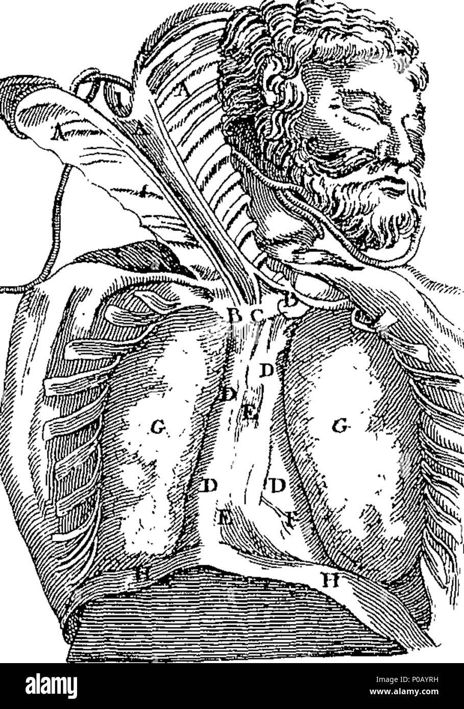 Beste Medizinischer Anatomie Wörterbuch Fotos - Anatomie Von ...