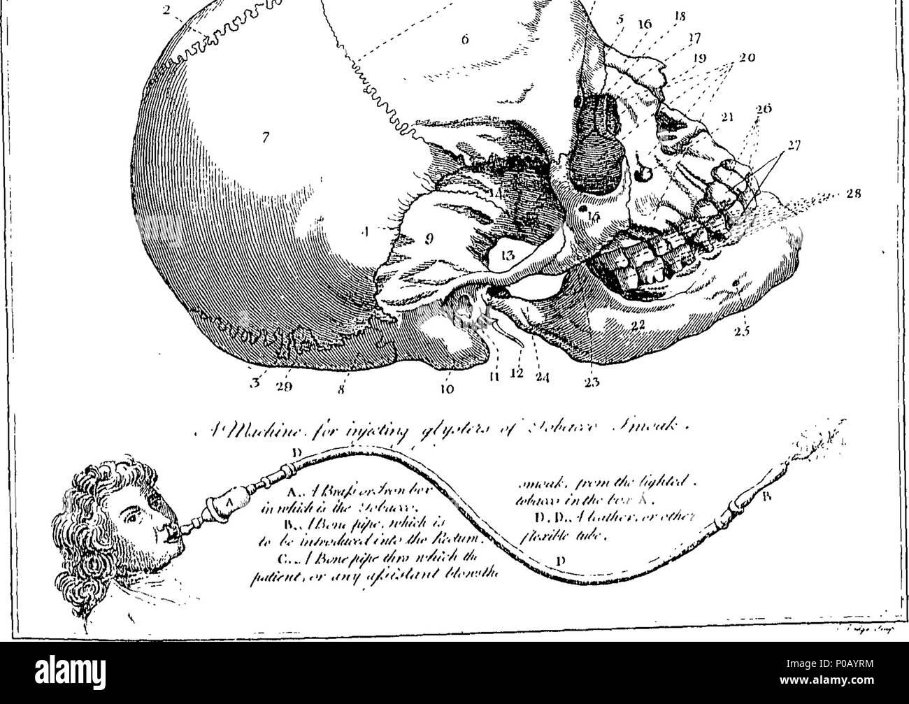 Wunderbar Anatomie Und Physiologie Beziehung Fotos - Physiologie Von ...
