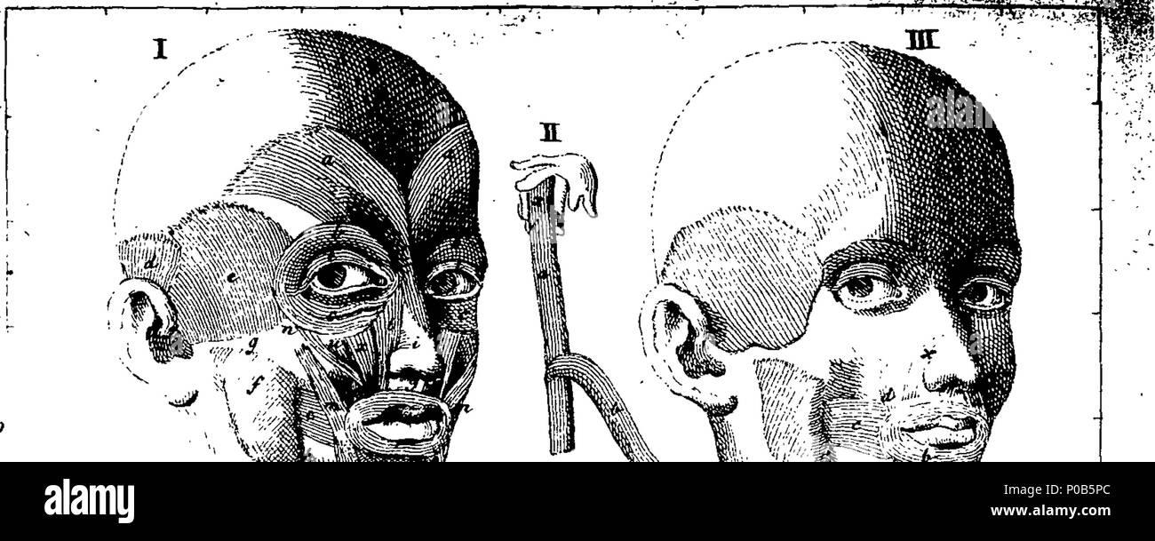 Englisch: Fleuron aus Buch: Eine anatomische Darstellung der ...