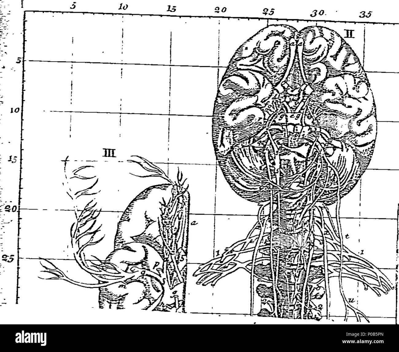 Wunderbar Positionen Des Körpers In Der Anatomie Fotos - Physiologie ...