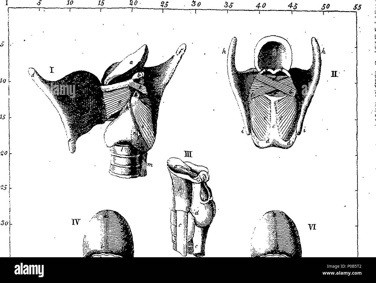 Groß Anatomie Des Menschlichen Körpers Buch Bilder - Anatomie Von ...