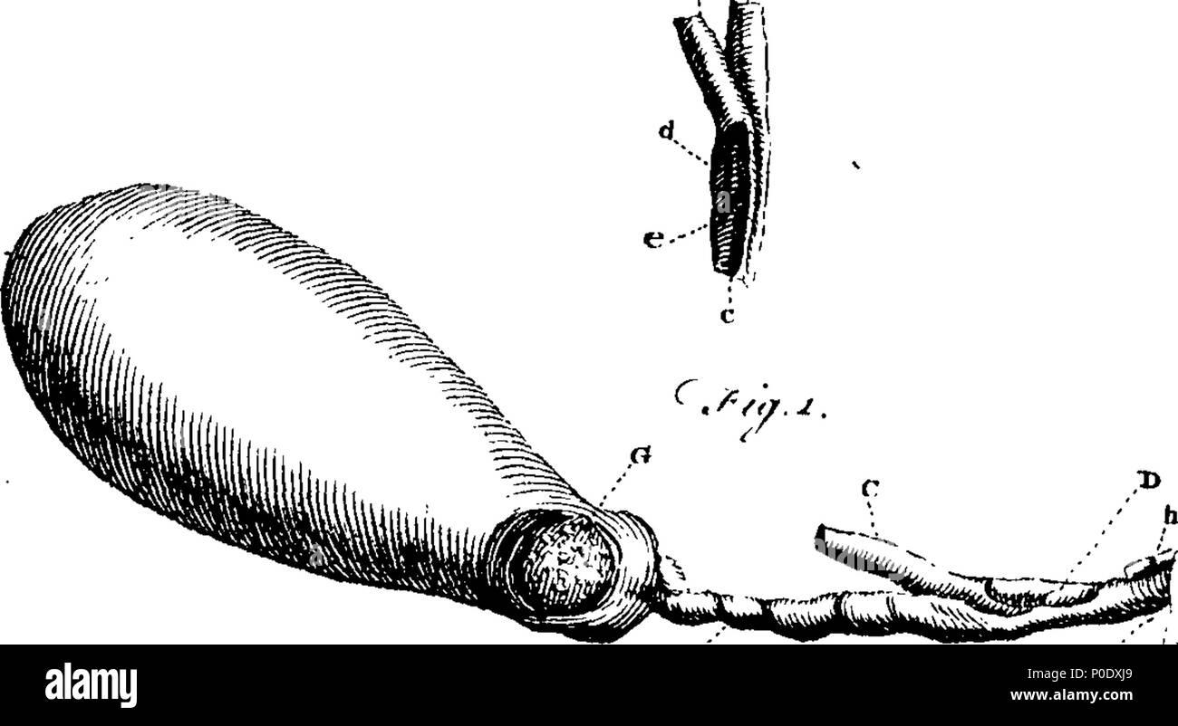 Ziemlich Bild Der Menschlichen Galle Bilder - Physiologie Von ...