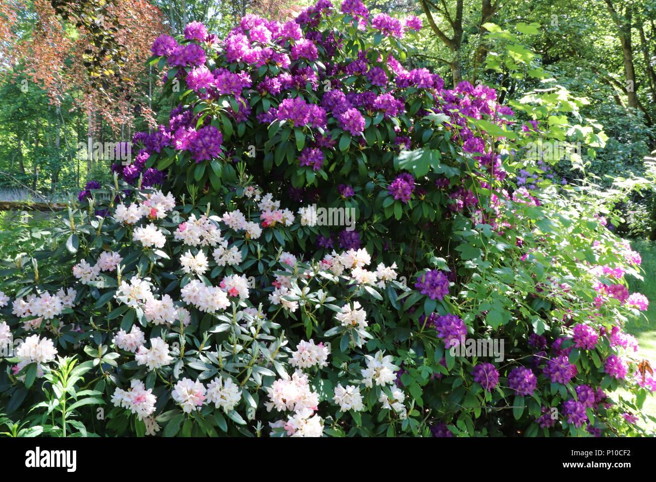 Blumen Pflanzen Und Sträucher Im Garten Stockfoto Bild 207148902