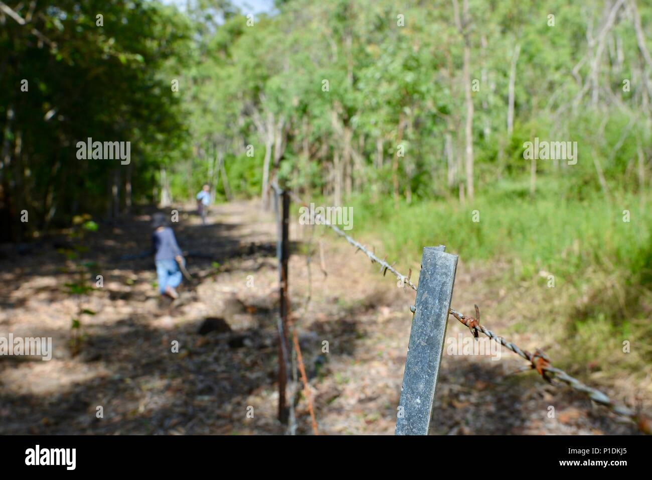 Verzinkter Zaun Mit Stacheldraht Im Australischen Busch Paluma