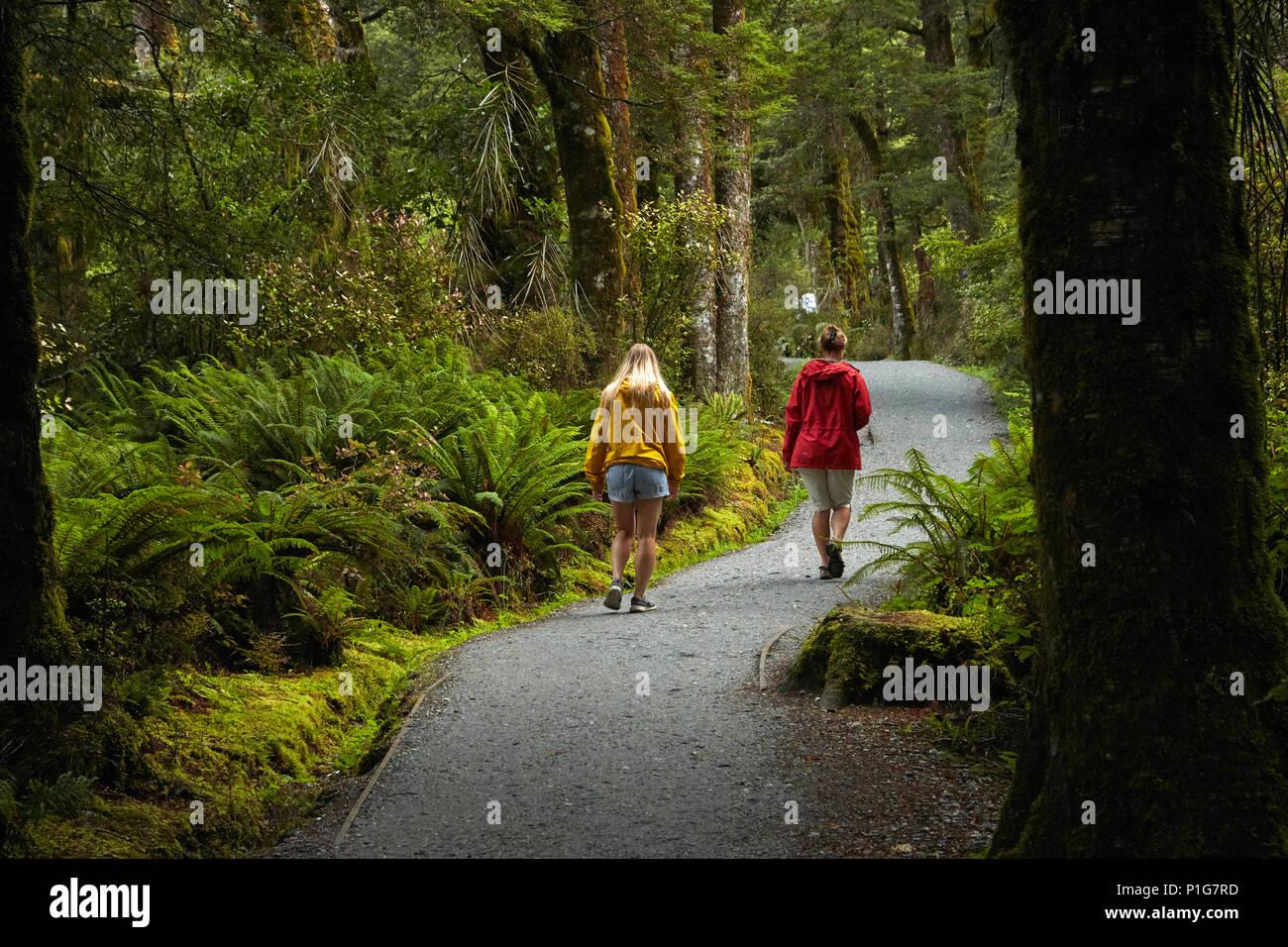 Anschluss an den blauen Pools, Mount Aspiring National Park, den Haast Pass, in der Nähe der Makarora, Otago, Südinsel, Neuseeland (Model Released) Stockbild