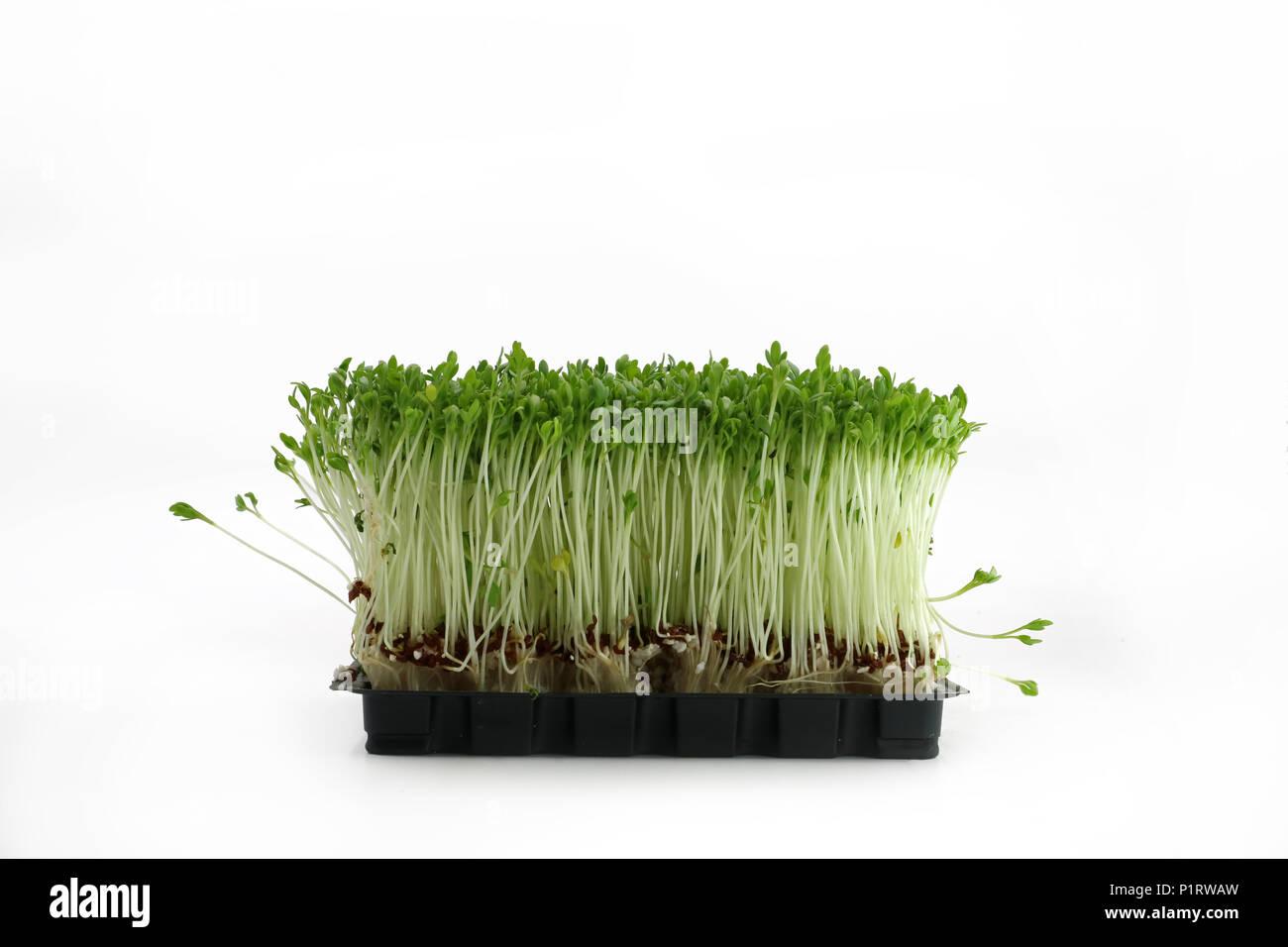 Gartenkresse in schwarz Schüssel Vorderansicht auf weißem Hintergrund Stockbild