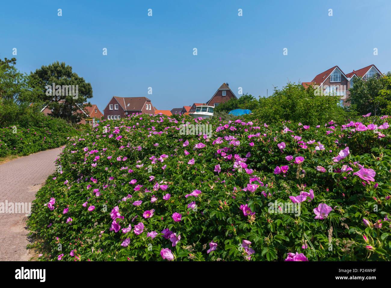 Apartmenthäuser, Baltrum, Ostfriesland, Niedersachsen, Deutschland Stockbild