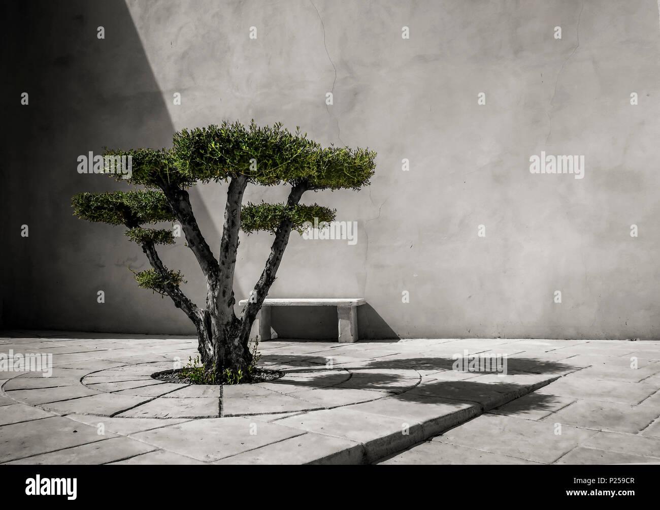 Super Olivenbaum Schneiden in Form auf verlassenen Platz Stockfoto, Bild @IG_33