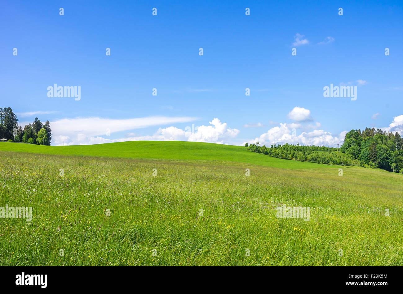 Hayfield und Landschaft im Westallgau Region rund um den Ort der Scheidegg in der Nähe von Lindau, Bayern, Deutschland. Stockbild