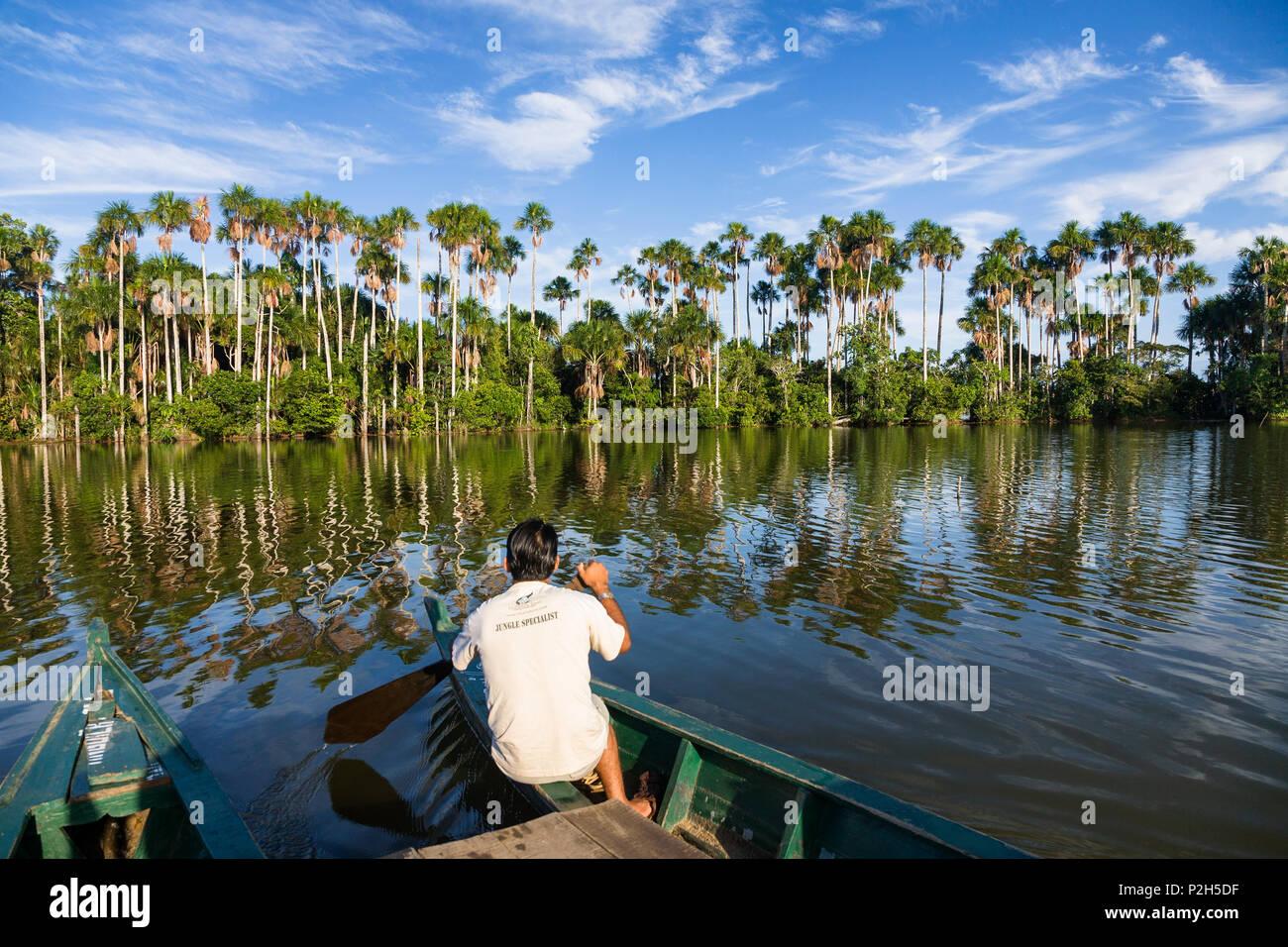 Boot und Mauriti Palmen, Buriti, moriche Palmen, an Sandoval Lake, Mauritia flexuosa, Tambopata National Reserve, Peru, Südafrika Stockbild