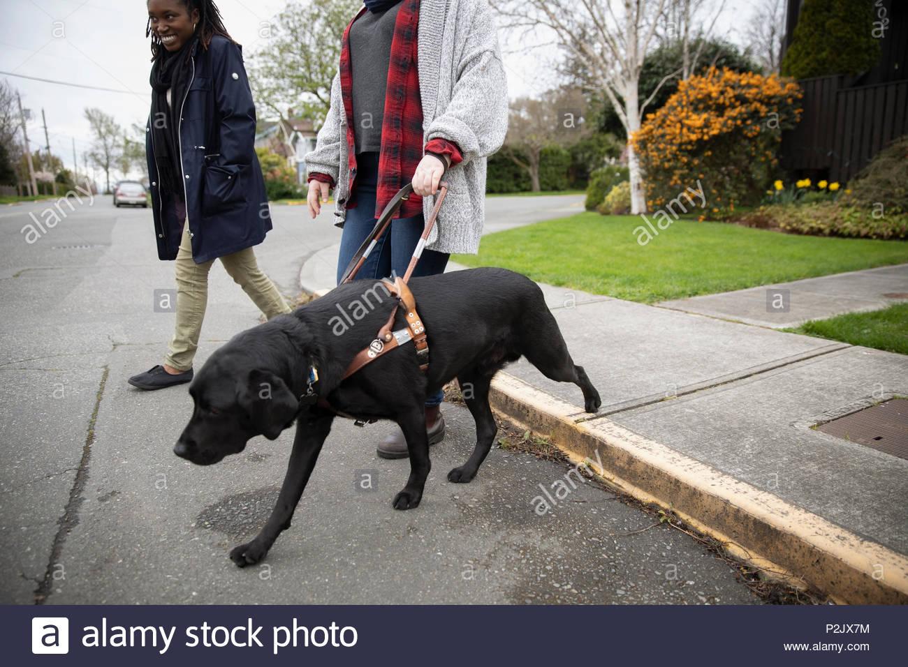 Blindenhund führenden Sehbehinderte Frau zu Fuß auf der Straße Stockbild