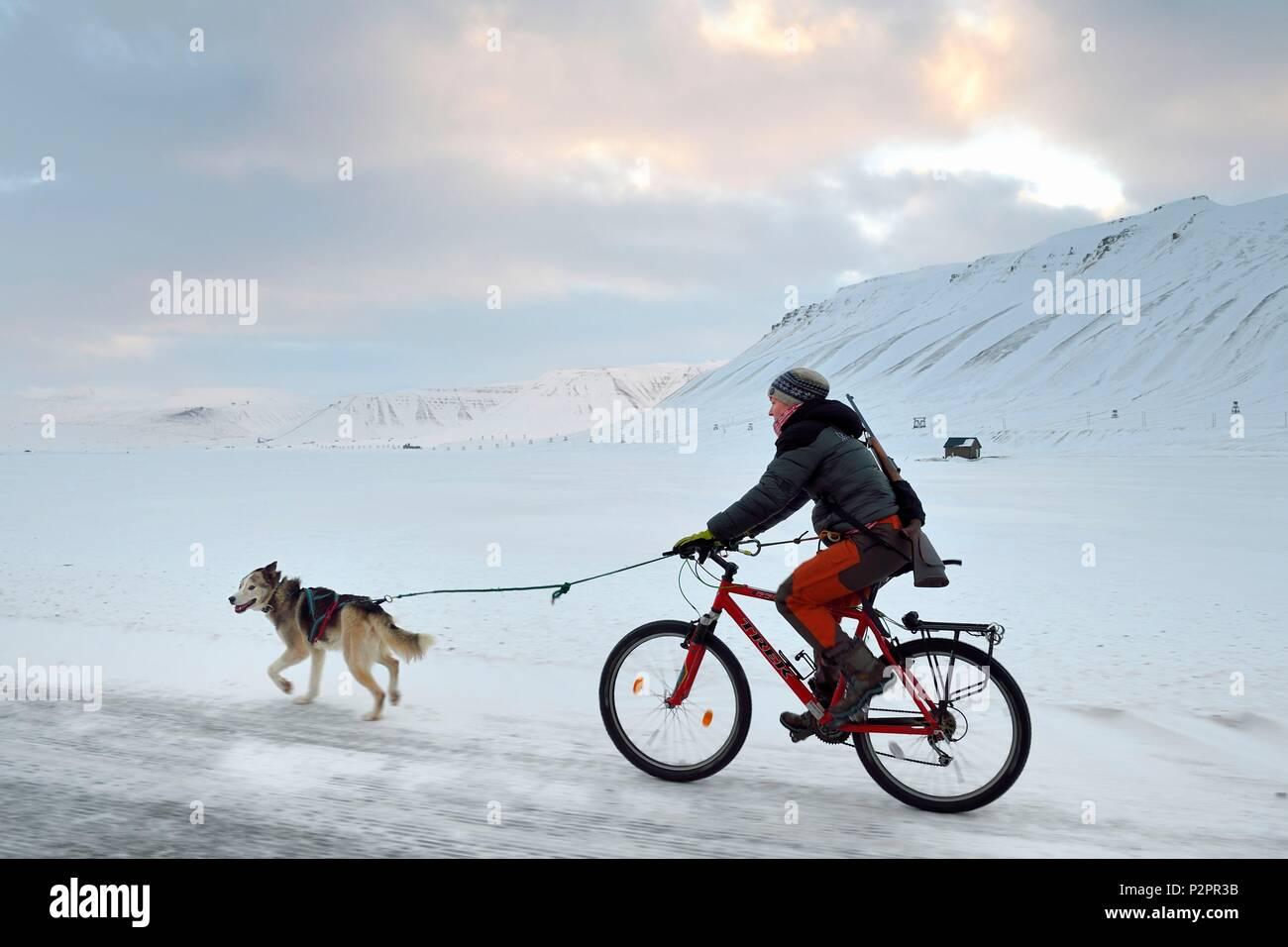 Norwegen, Svalbard, Spitzbergen, Adventdalen Tal in der Nähe von Longyearbyen, Hund zu Fuß mit dem Fahrrad mit einem Gewehr gegen die mögliche Gefahr der Eisbären zu schützen Stockbild