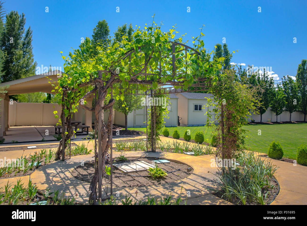 Garten Pavillon Mit Reben Wächst Auf Und Im Hintergrund Mit