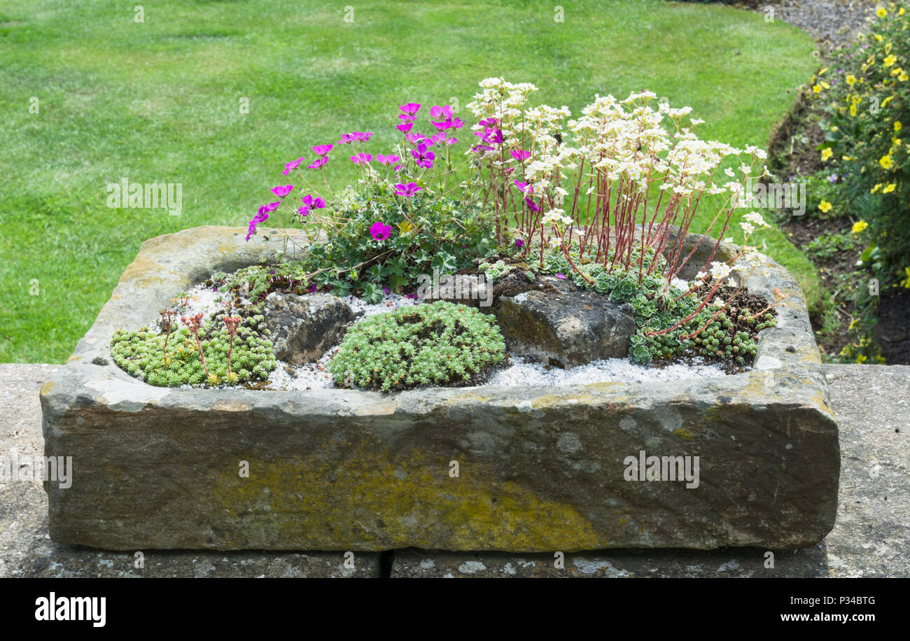 Stein garten Waschbecken bepflanzt mit alpines Stockfoto ...