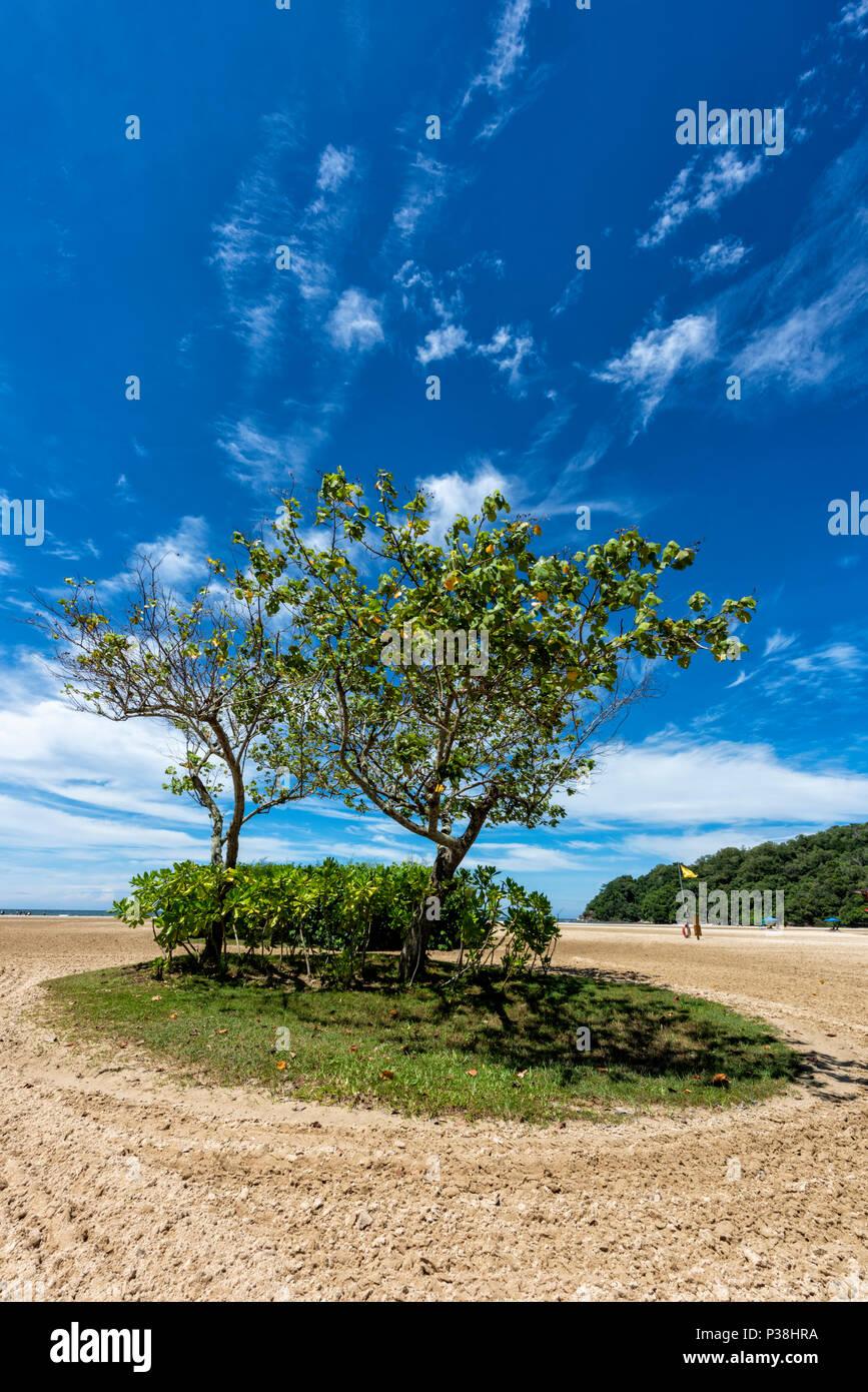 Büschel der Bäume und ein Patch des Grases auf den Strand bei Kota Kinabalu, Borneo, Malaysia Stockbild