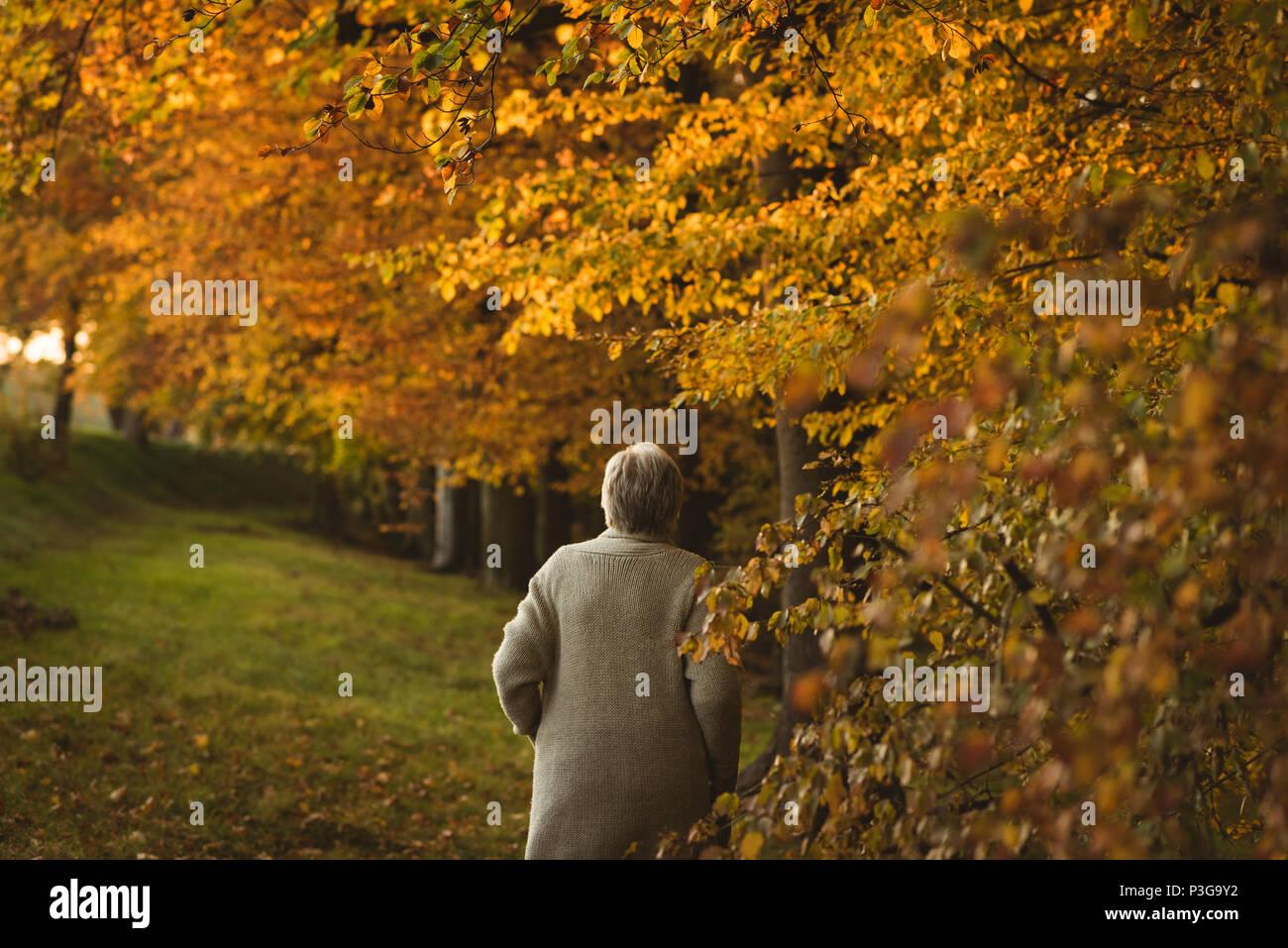 Ältere Frau mit Jacke Fuß in den Park in der Morgendämmerung Stockbild