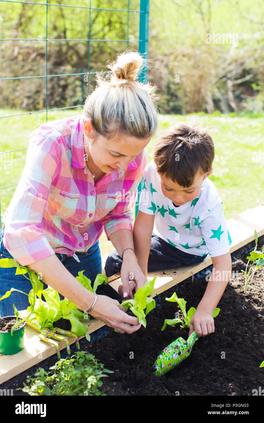 Schönen Mutter und ihre blonde Sohn pflanzen Salat in der angehobenen Bett in Ihrem Garten Stockbild