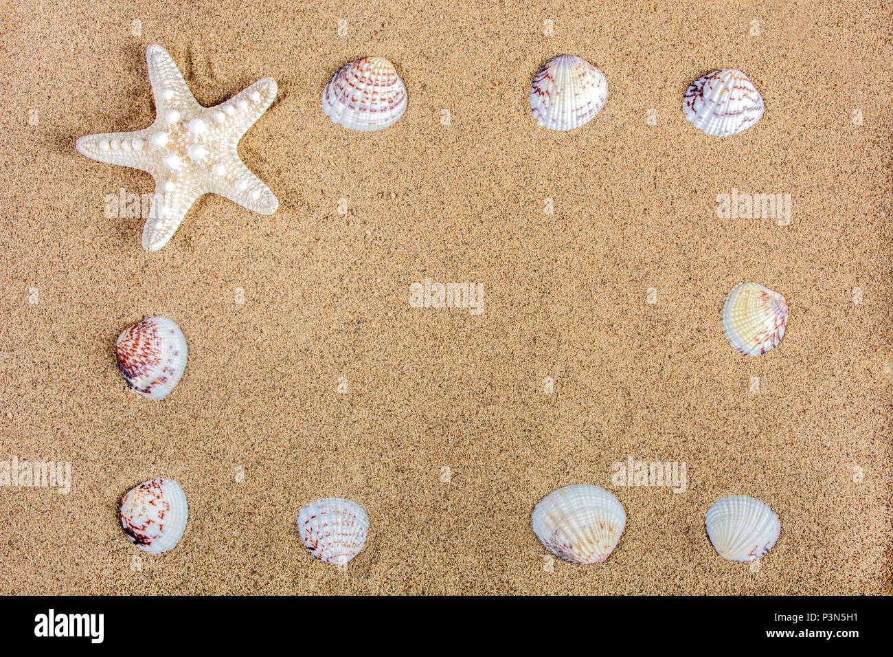 Meer Natur Rahmen mit Seesternen und Muscheln am Strand sand. Sommer ...