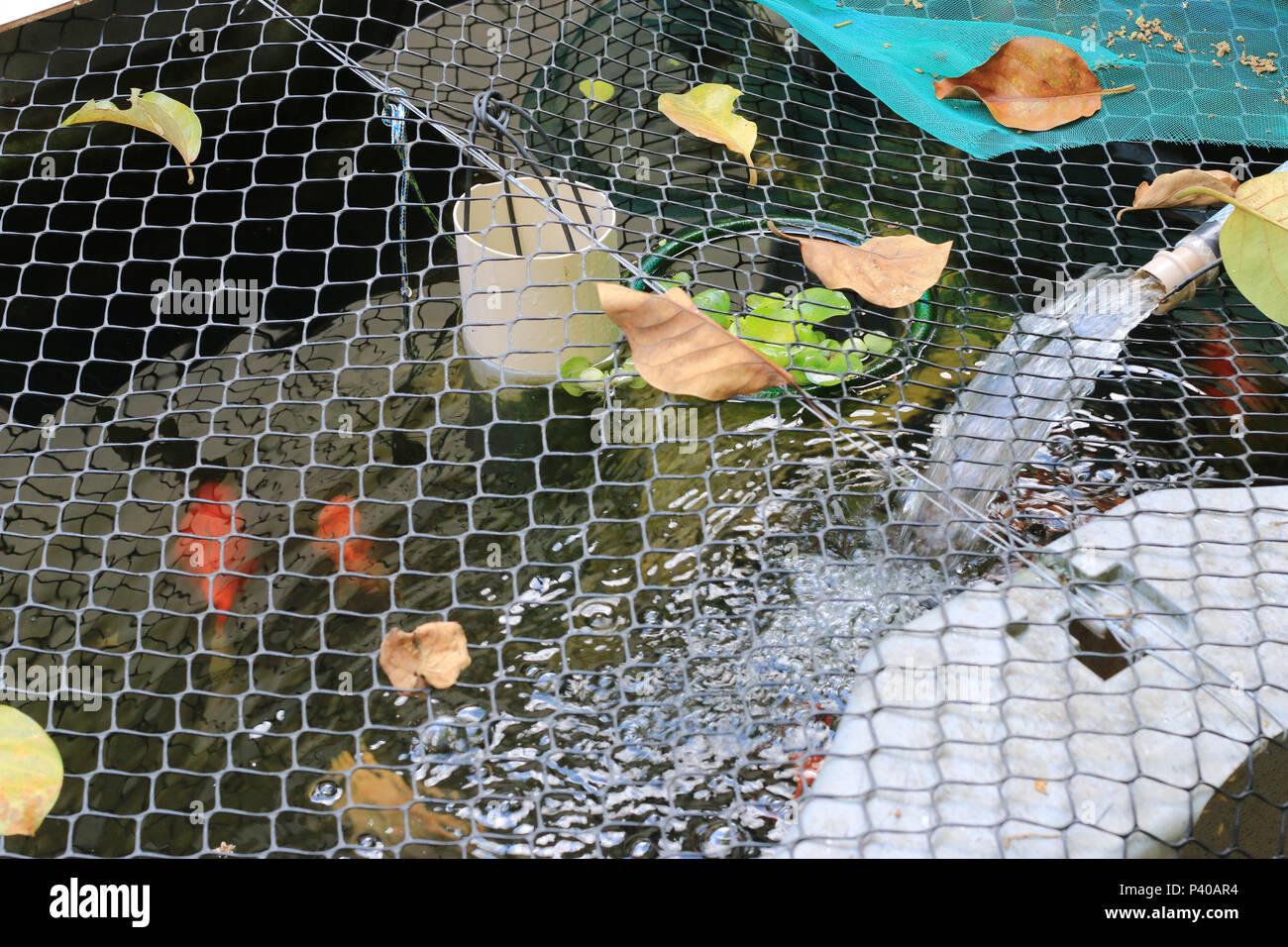 Tanque com caseira criação de peixe Wels e Carpa, em Residência localizada em Cajamar. Stockfoto