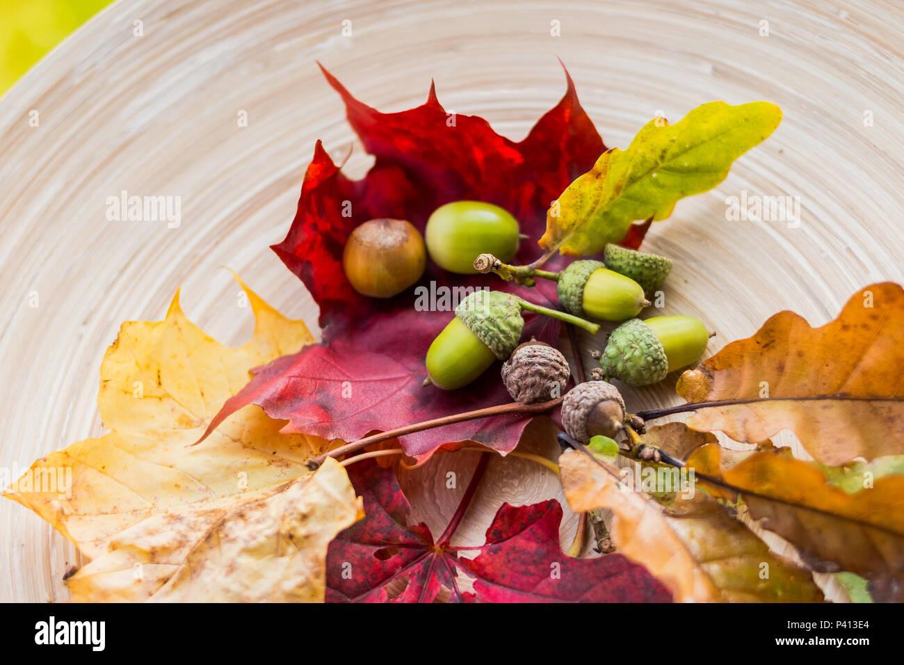 Leaves Frame Stockfotos & Leaves Frame Bilder - Seite 3 - Alamy