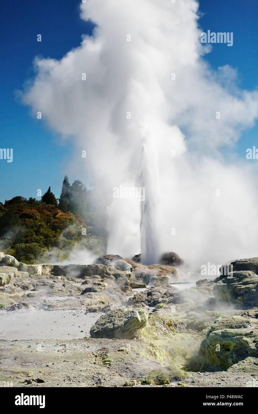 Pohutu Geysir Ausbruch, Neuseeland Stockbild
