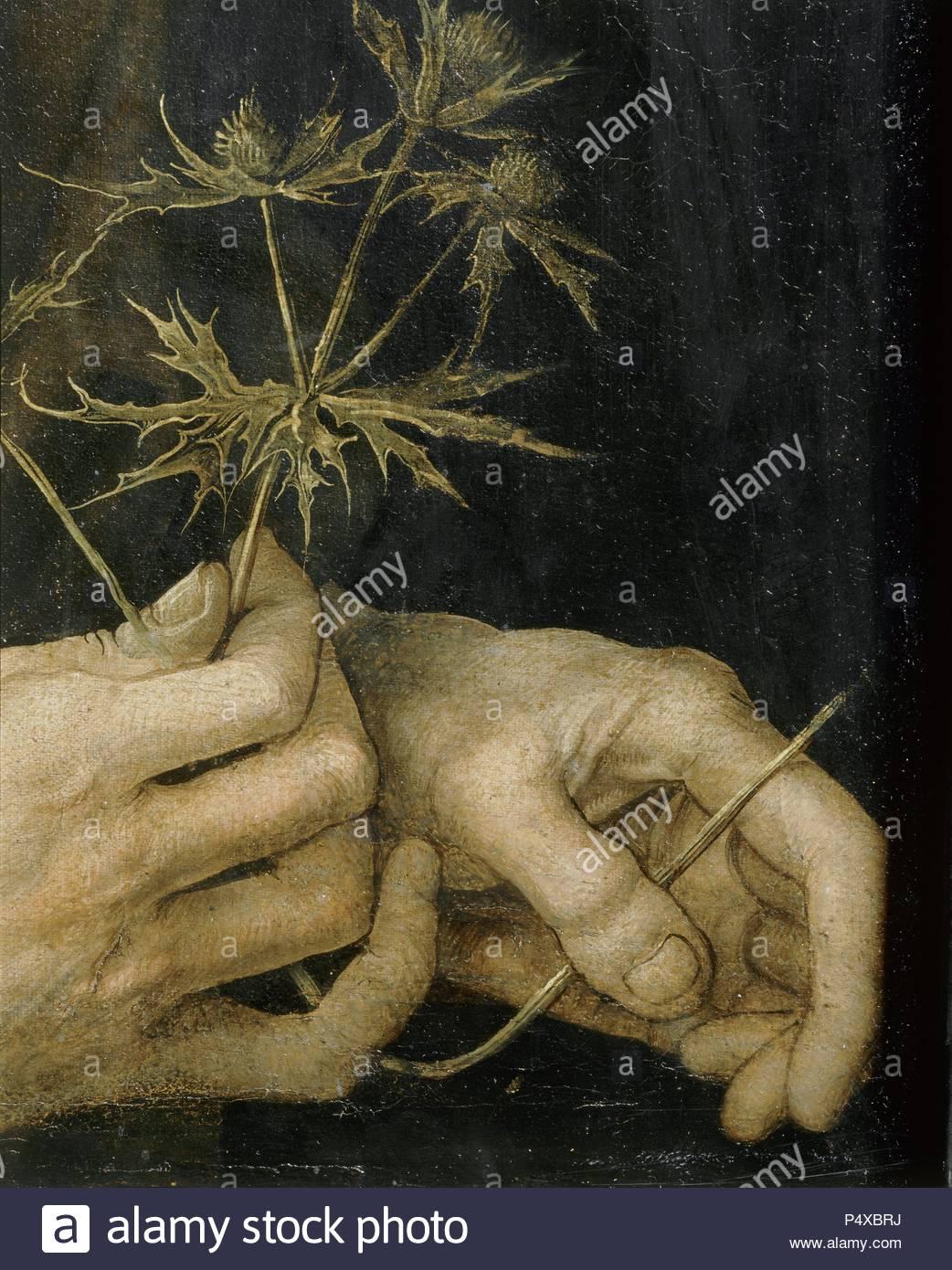 Albrecht Dürer, Selbstporträt, 1493. Detail seiner Hände halten eine Distel. Für die Gesamte finden 40-05 -01/45. Öl auf Papier auf Leinwand, 56,5 x 44,5 cm. R.F. 2382 (auch unter 40-13 -02/4). Autor: Albrecht Dürer (1471-1528). Lage: Louvre, Dpt. des Peintures, Paris, Frankreich. Stockfoto