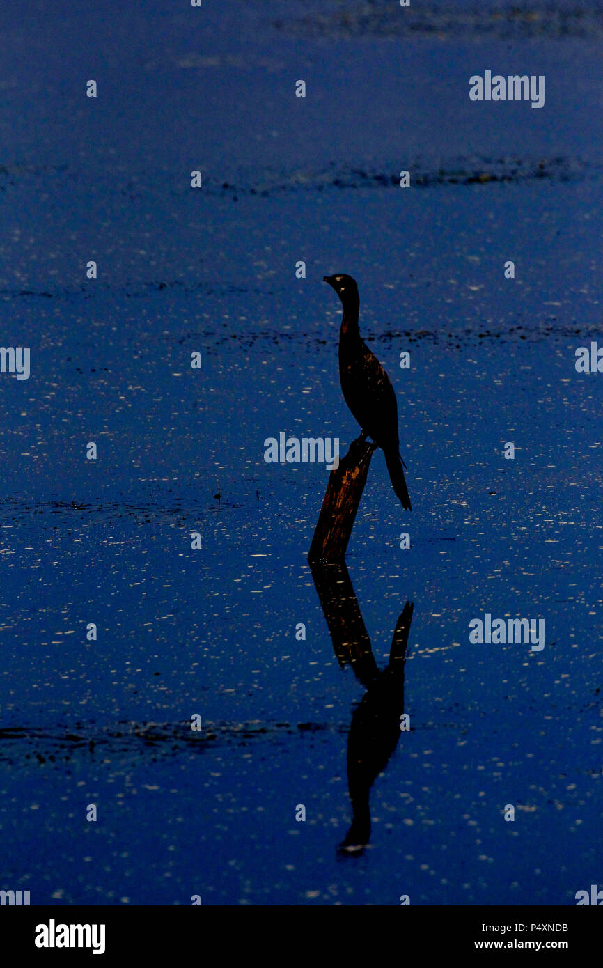 Vogel Sitzt Auf Bambus An Tanguar Haor Das Grosste Feuchtgebiet In