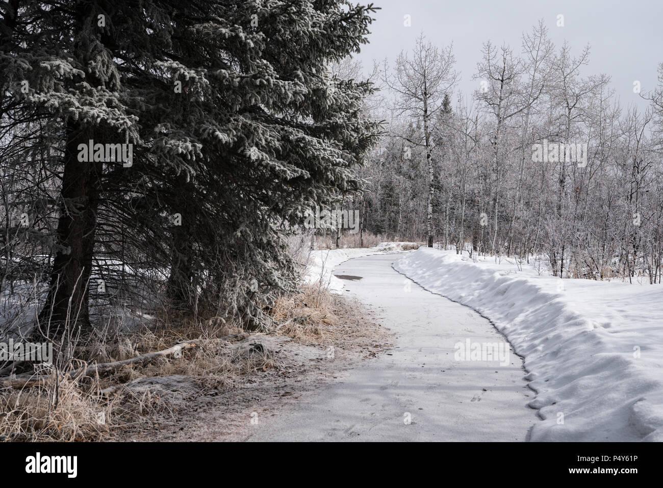 Gedämpften Farben snowy Forst zu Fuß Stockbild