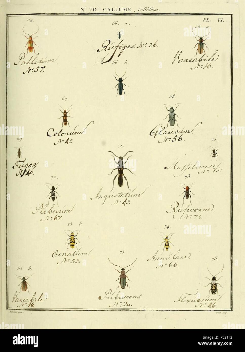 Entomologie, ou Histoire Naturelle des Insectes:. Stockbild