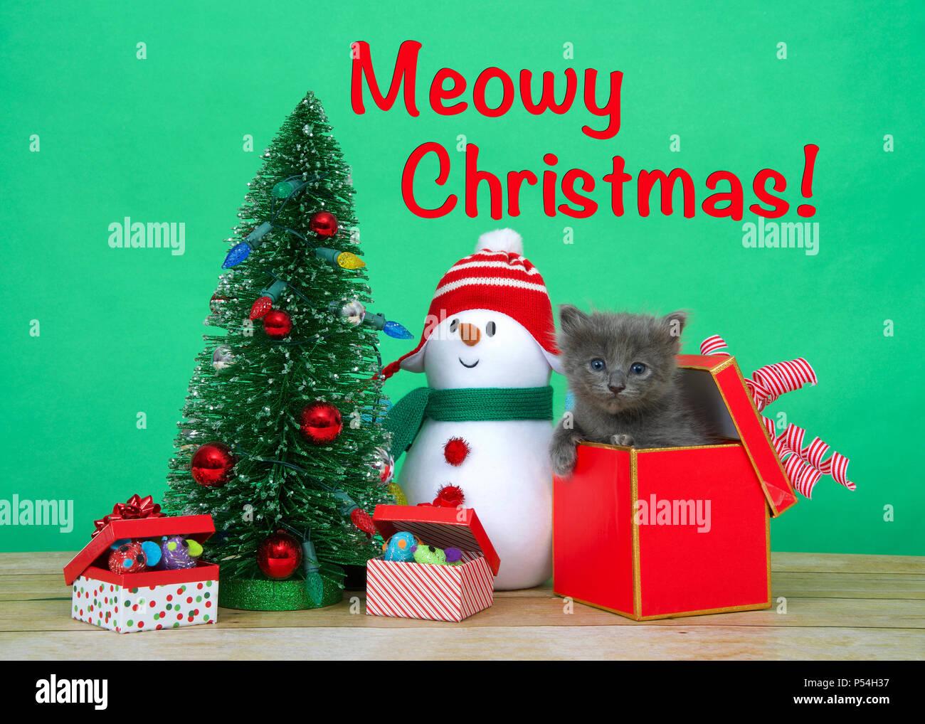 Kleine niedliche graue Kätzchen peaking aus einem roten und goldenen ...