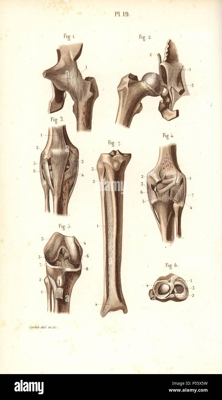 Großartig Anatomie Knochen Körper Ideen - Menschliche Anatomie ...