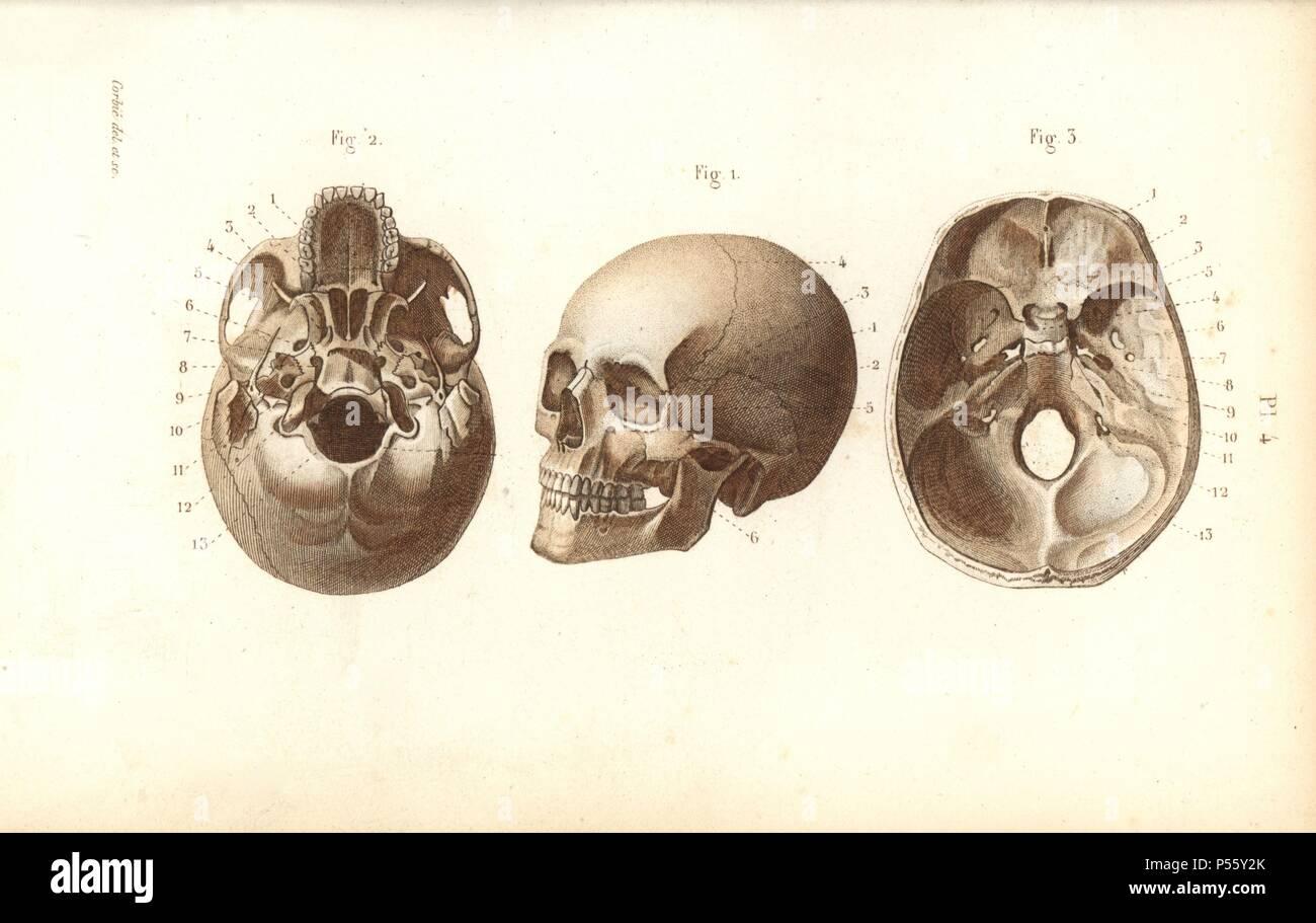 Wunderbar Atlas Wirbel Anatomie Ideen - Physiologie Von Menschlichen ...