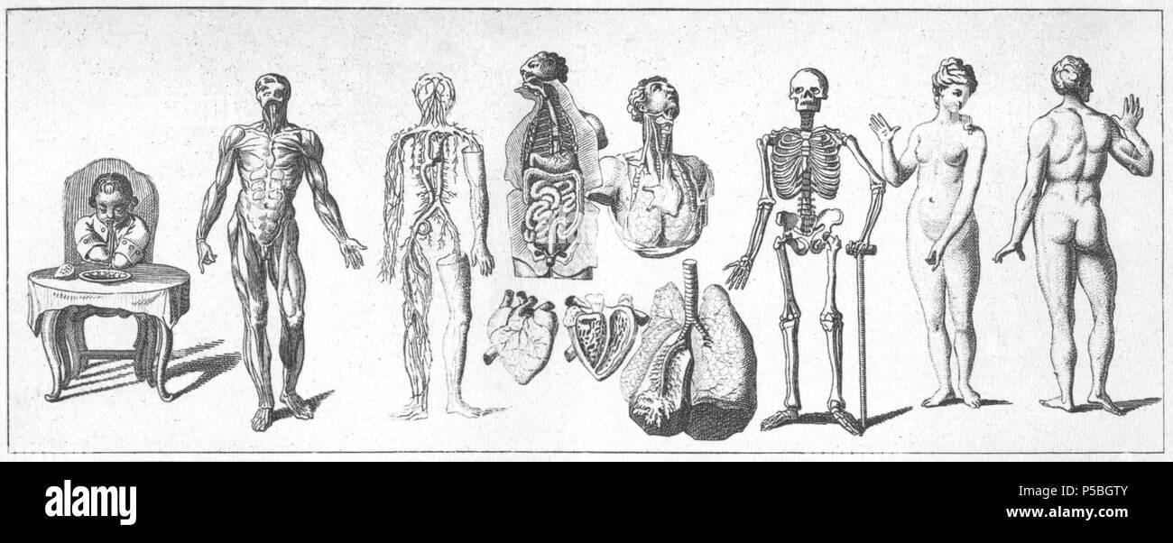 Groß Muskeln Namen Des Menschlichen Körpers Bilder - Anatomie Ideen ...