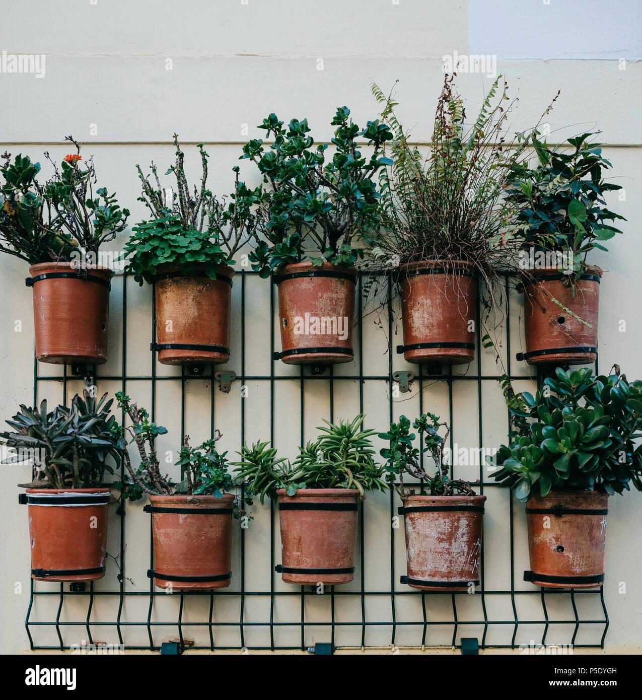Viele Töpfe mit Pflanzen an der Außenwand des Hauses für die ...