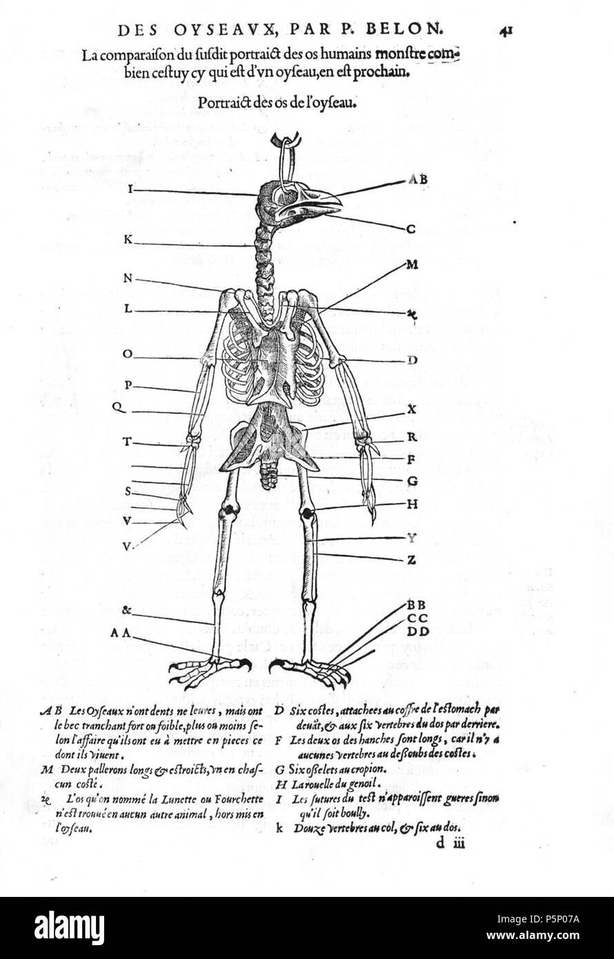 Tolle Vogel Hals Anatomie Galerie - Anatomie Von Menschlichen ...