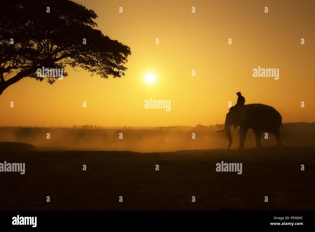 Goldene Stunde Der mahout und Elephant Silhouette am Feld morgen mal in dieser das Leben der Völker in Chang Dorf in der Provinz Surin, Thailand. Tradition li Stockbild