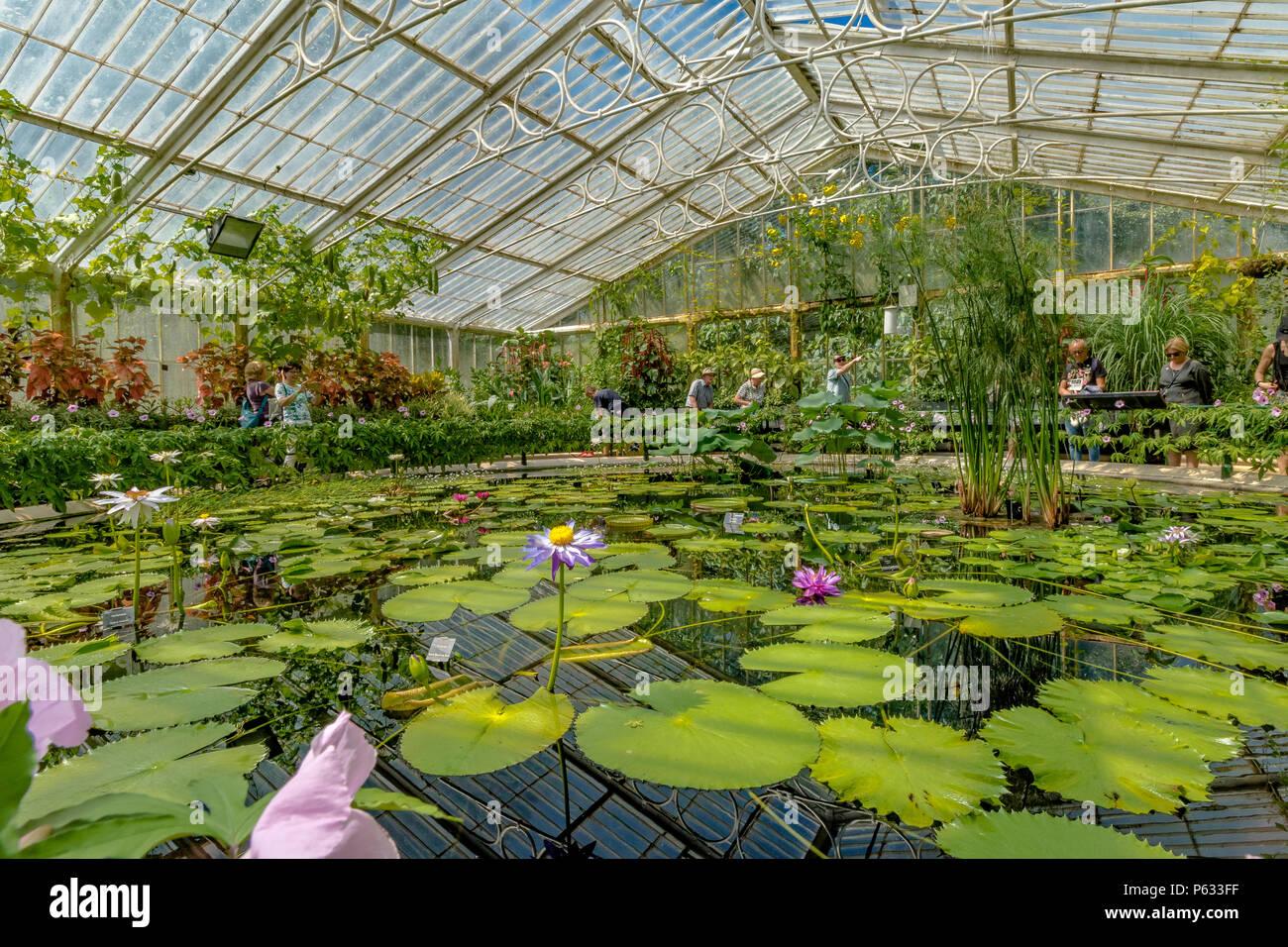 Kew Gardens Seerose Haus, das heißeste und feuchteste Umwelt bei Kew ...