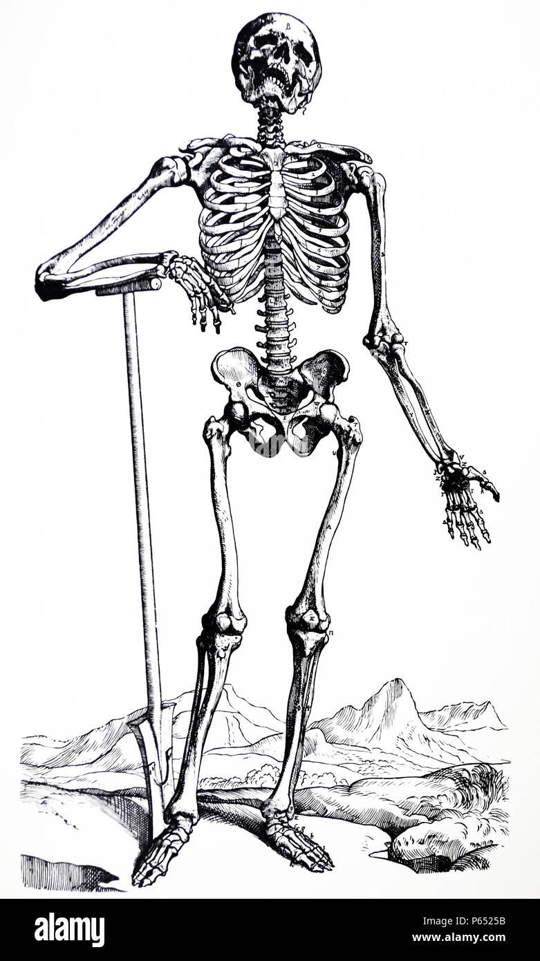 Gemütlich Tische Darstellung Eines Menschlichen Körpers Ideen ...