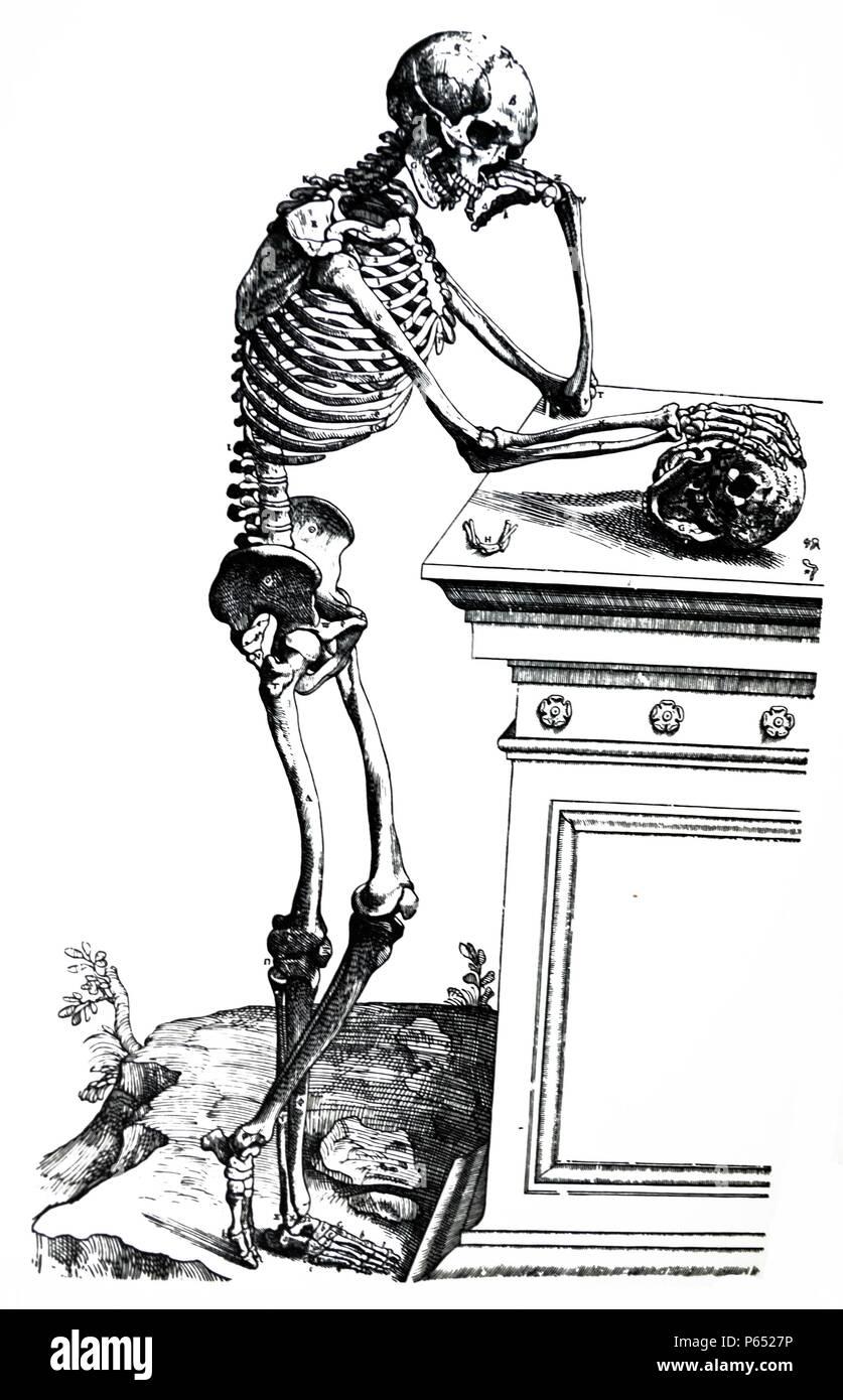 Gemütlich Alle Knochen Im Menschlichen Körper Fotos - Anatomie Ideen ...