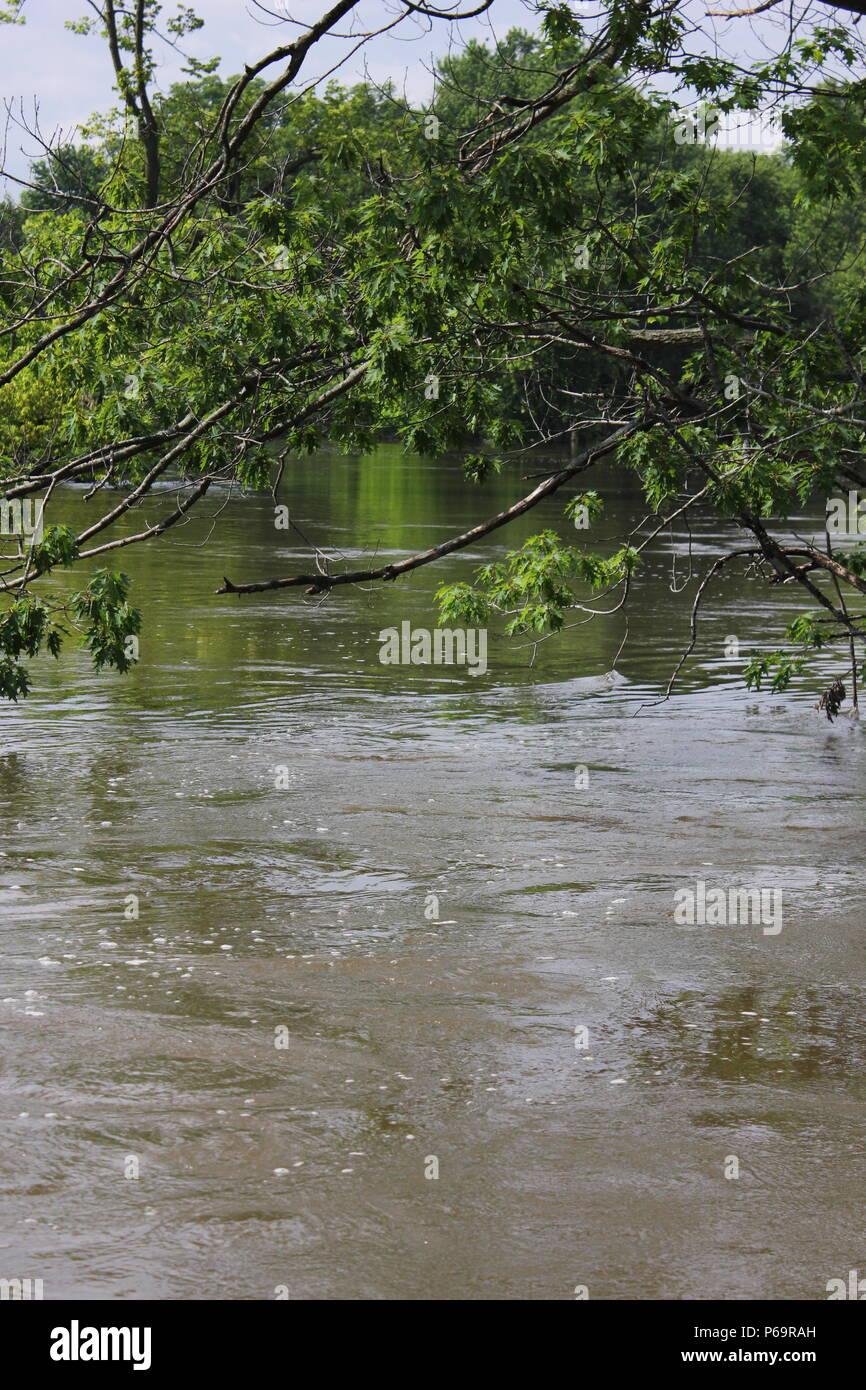 Die überflutung des Des Plaines River am River Trails Nature Center in Northbrook, Illinois. Stockbild