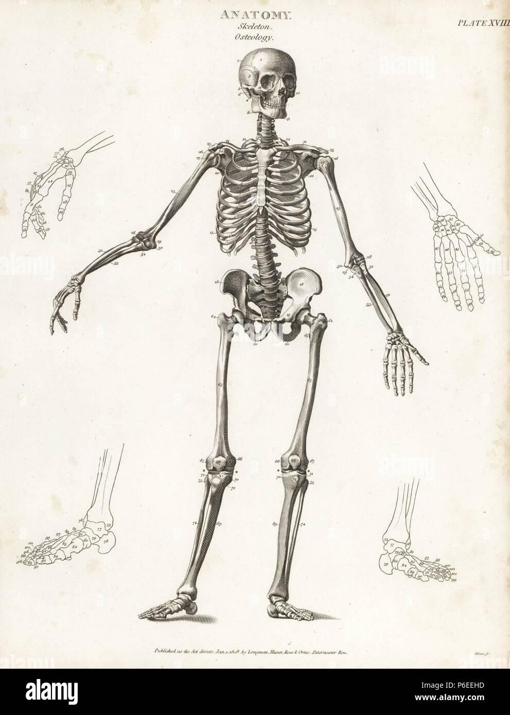 Großartig Anatomie Und Physiologie Vokabular Ideen - Anatomie Von ...